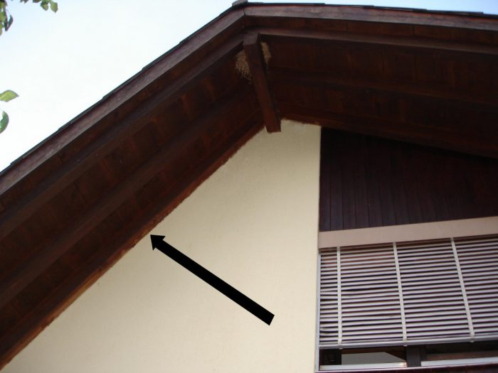 Fledermäuse am Haus Fledermaus